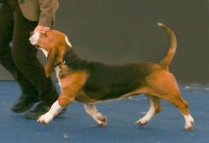 Camille at the World  Dog Show in Salzburg